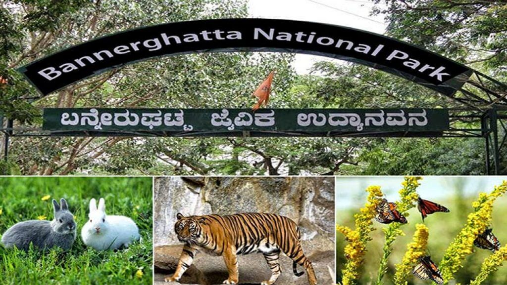 Bannerghat-National-Park-Bangalore