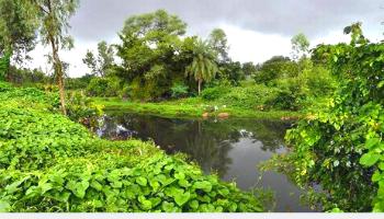 Kammasandra lakes bangalore